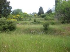 Land_outside_spartillas__1_
